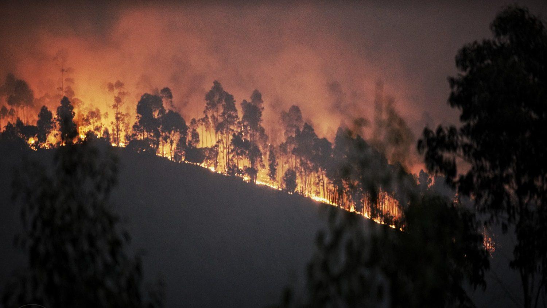 Incêndios: Quase 210 mil hectares ardidos, 2017 foi o pior ano da última década