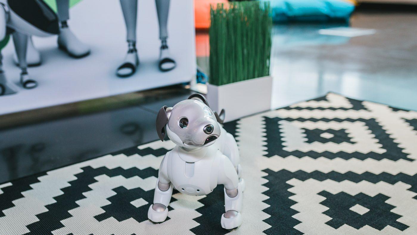 AIBO, o cão robô que veio a Portugal mostrar de que é feita a inovação