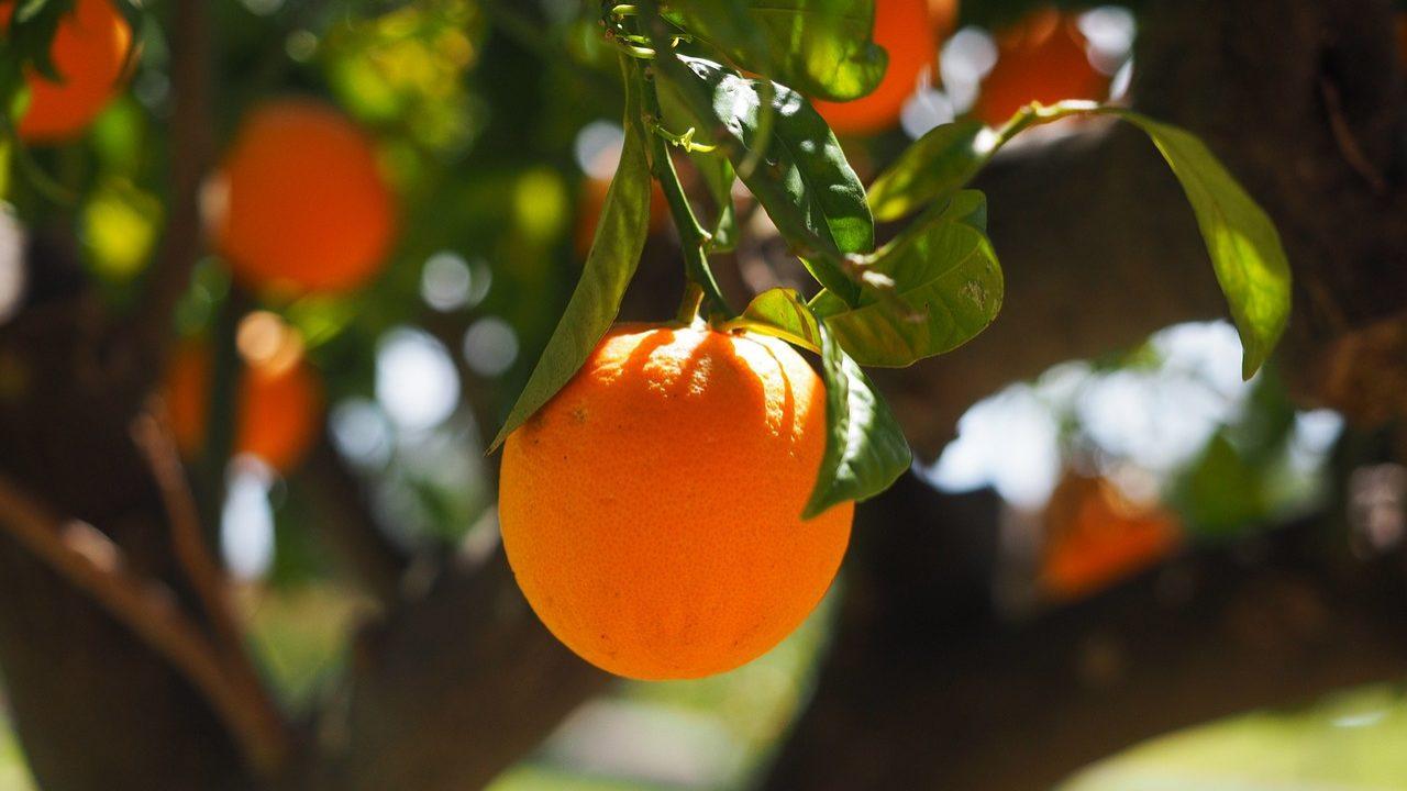 Auchan vai usar desperdício do sumo de laranja para produzir bioetanol